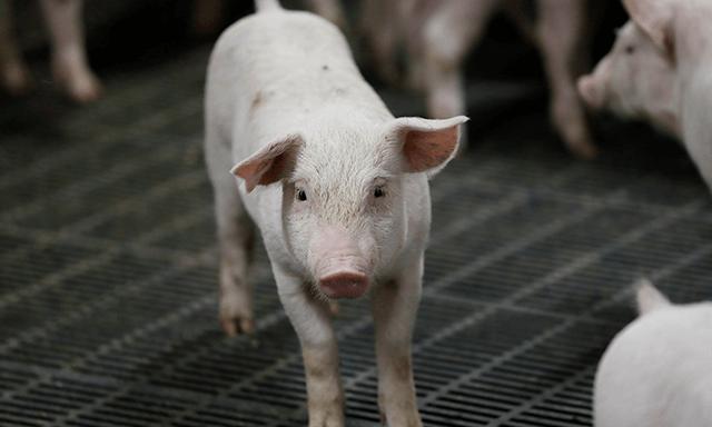 大分県産ブランド豚肉【米の恵み】とは